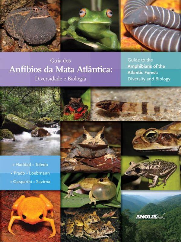 Diversidade de anfíbios da mata atlântica. Crédito: Reprodução
