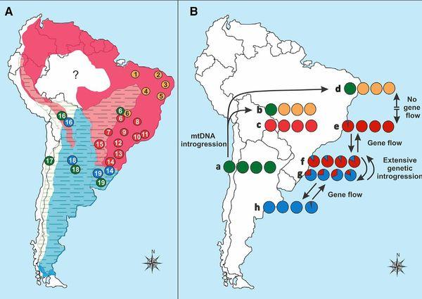 Mapas mostram distribuição geográfica e cruzamento entre espécies