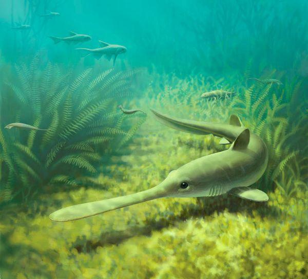 Tubarão pré-histórico na luta pela sobrevivência. Crédito: John Megahan/Universidade de Michigan