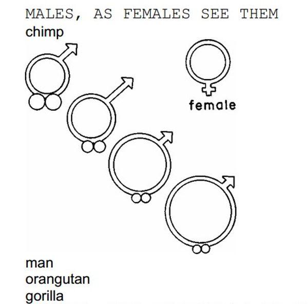 Comparação entre tamanhos de pênis e testículos de machos primatas. Do alto, à esq., para baixo, à dir.: chimpanzé, homem, orangotango e gorila. Crédito: Reprodução
