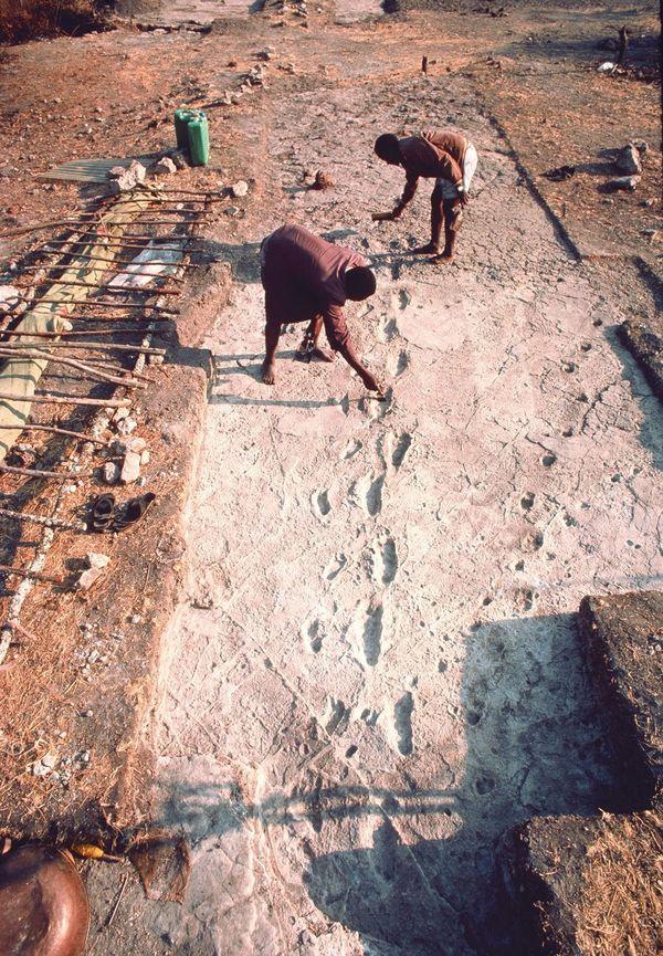 Pegadas de Laetoli, Tanzânia (Crédito: Reprodução)