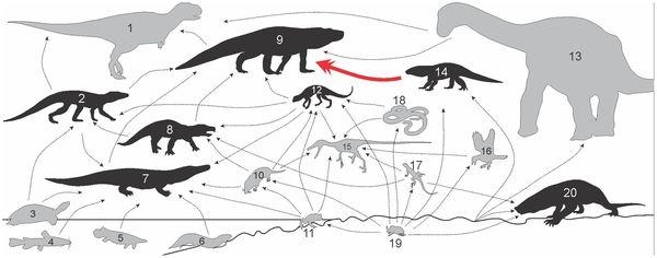 Teia alimentar do fim do Cretáceo do interior paulista (há 85 milhões de anos). Lista completa das espécies abaixo