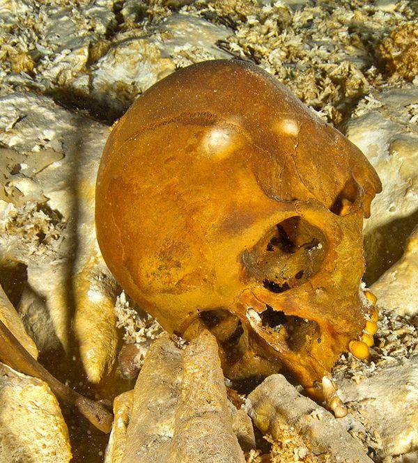 O crânio mexicano conhecido como Naia. (Crédito: Divulgação)