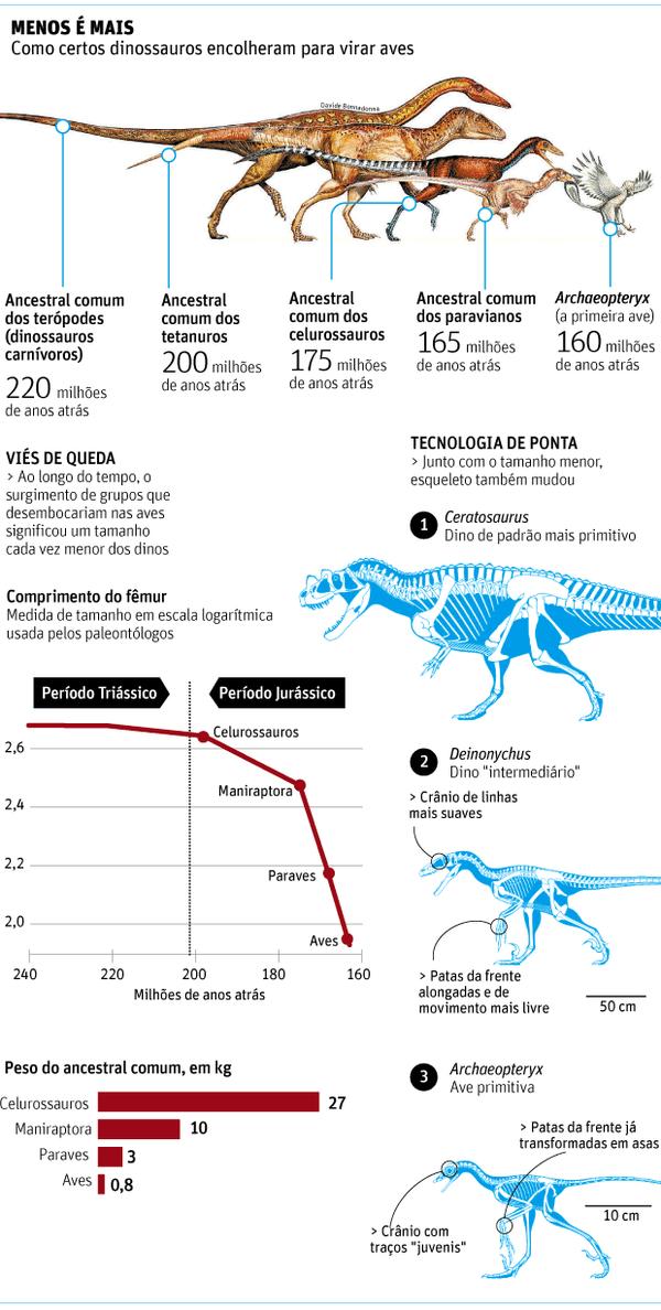 Infográfico explica origem das aves (Crédito: Arte/Folhapress)