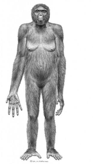 """""""Ardipithecus ramidus"""": se isso não é elo transicional, eu não sei o que é. (Crédito: Divulgação)"""