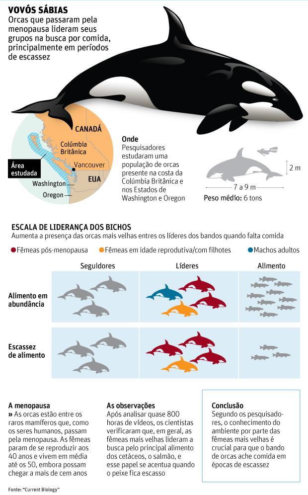 Infográfico explica as orcas na menopausa