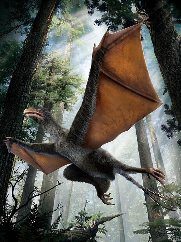 O dinossauro-morcegão chinês: tá esquisito o suficiente pra você? (Crédito: Divulgação)