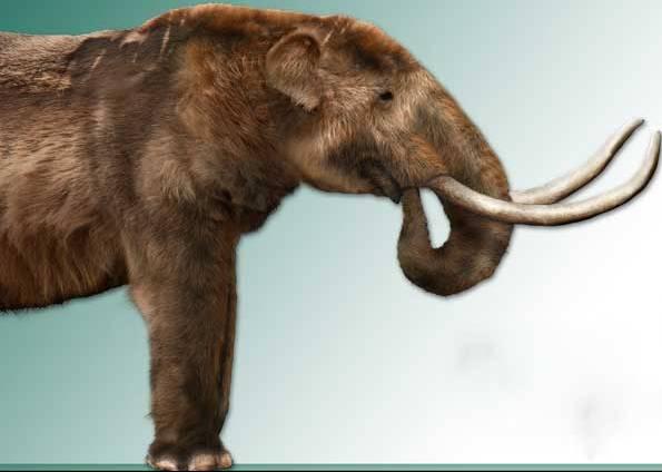 """E este seria um legítimo """"elefante"""" extinto brasileiro, o """"Stegomastodon"""" (Crédito: Reprodução)"""