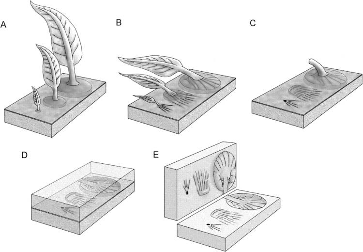 Simpático esqueminha de como esses organismos podem ter se preservado após a morte